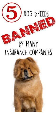 5 Dog Breeds Banned by Many Insurance Companies. Find out why.