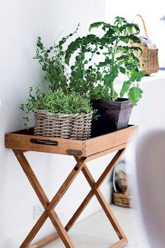 #pflanzenfreude #pflanze #pflanzen #plants #planters #plant #indoor #wohnen #living #interior #interieur