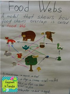 Food chains and food webs covers ks2 science food chains and food classroom in paradise art science integration food chains and food webs sciox Choice Image