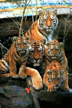 The Whole Family. #BigCatFamily