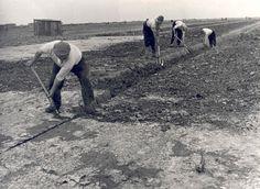 Noordoostpolder. Greppels graven met de hand. 1941 Fotocollectie Nieuw Land, Directie Wieringermeer; H. Nieuwenhuis