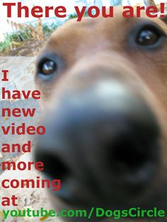 DOG - DOGS YouTube VIDEO - VIDEOS at https://www.youtube.com/dogscircle