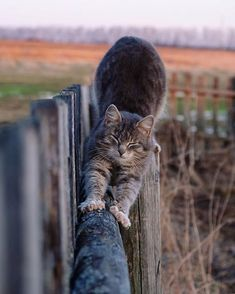 In fact, the word tabby denotes a coat pattern. Excellent What It Means to Be a Tabby Cat Ideas. Cute Kittens, Cats And Kittens, Tabby Cats, Crazy Cats, I Love Cats, Animals And Pets, Cute Animals, Curious Cat, Cute Creatures