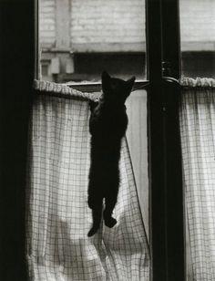 La vie secrète des chats parisiens