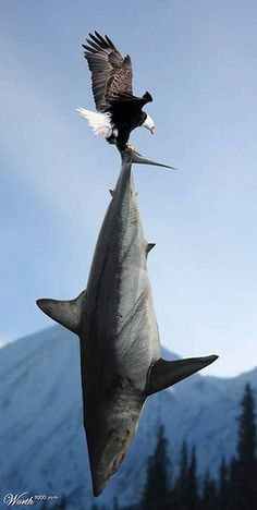 Funny Pictures, Jokes and Gifs / Animations: Falcon Flying with Dolphin Funny Animals Pictures Weird Pictures, Funny Animal Pictures, Funny Images, Funny Animals, Silly Faces, Think Big, Mundo Animal, Fauna, Bird Watching