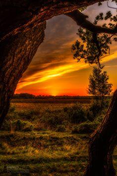 Sunset tree...... - null