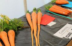 The Royal Welsh Agricultural Show