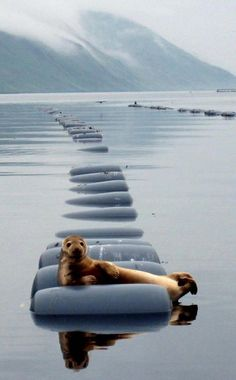 seal relaxation.