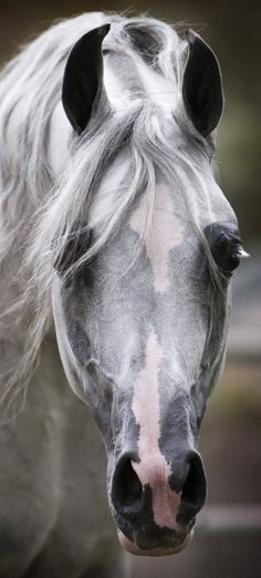 *beautiful horse