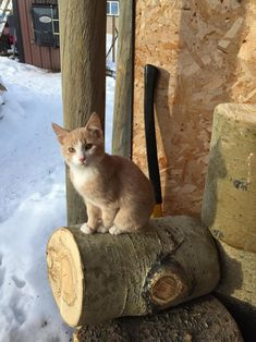 Handsome farm kitty Nelson J by _northernlights cats kitten catsonweb cute adorable funny sleepy animals nature kitty cutie ca