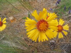 wild-flower-sensible-gardening.jpg