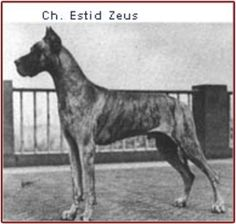 CH Estid Zeus            (Import)            (CH August of Brae Tarn x CH Zelia v Loheland)            Foundation stud of Dinro.            Rosemarie Roberts purchased him from Ernie Ferguson in CA.            Estid Zeus was bred to Annabella of Dancroft - both sharing the common grandfather CH Randolph Hexengold.
