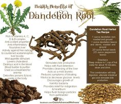 Dandelion root tea recipe  for digestion, gas and bile production