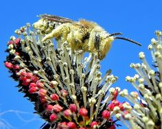 Black Pussy Willow and Bee W.O.W Life is Amazing !