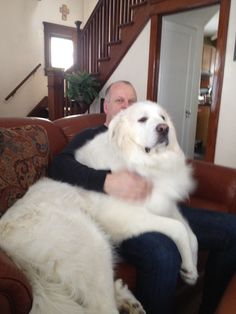Paul and george our great pyrenees