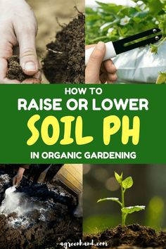 Most plants are sensitive to soil PH, and so if you can manage it well, you will not have any issues with their germination and growth. Whether you want to raise the PH of an acidic soil or lower an alkaline one a little knowledge is all that you need. Madison Square Garden, Hydroponic Gardening, Hydroponics, Vegetable Gardening, Container Gardening, Indoor Gardening, Hydroponic Systems, Succulent Containers, Fairy Gardening