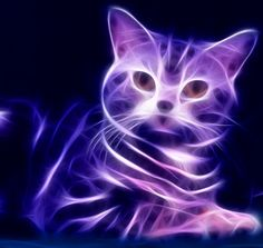 17 Best images about Anything purple Purple Cat, Purple Love, All Things Purple, Shades Of Purple, Purple Stuff, Art Fractal, Purple Animals, Psy Art, Beautiful Cats