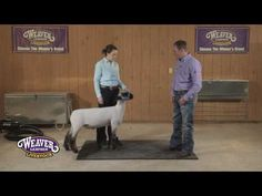 60 Best 4-H Projects images in 2019   Livestock, Goats, Sheep