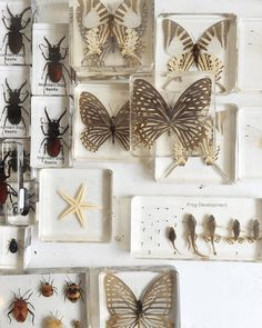 Insects, Butterflies and Tadpoles Preserved in Resin | Gather Goods Co