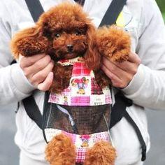 ▷ Cómo peinar a un Lulú de Pomerania PASO a PASO ✔️ Teddy Bear, Animals, Cruiser Bikes, Ferrets, Dog Cat, Pets, Dogs, Gatos, Animales