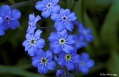 So. California Blue flowers called Forget Me Not........definitely will use them!!