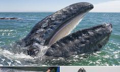 Tourists get so close to grey whales they can touch them