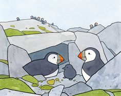 Puffin Burrow with chick - studio tuesday illustration