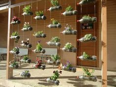 Hanging plastic bottles as a garden