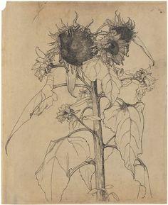 +Zonnebloemen, Richard Roland Holst, 1878 - 1938 (via Rijksmuseum) Art And Illustration, Botanical Illustration, Sunflower Drawing, Sunflower Art, Botanical Drawings, Botanical Art, Art Floral, Illustration Botanique, Gravure