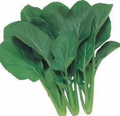 Komatsuna Green - 400 seeds - Oriental Vegetable