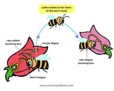 our planet facts about animals and a video on pinterest : pollination diagram - findchart.co