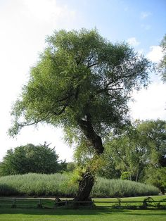 Tree Heart....  (Look for It...)
