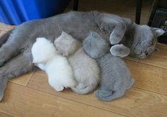 Mama Cat Ran Out of Toner. La impresora de gatos se quedó sin tinta.