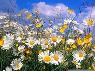 Wildflowers - Pixdaus