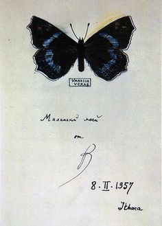 One of Vladimir Nabokov's butterfly drawings for his wife Vera