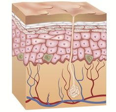 The new treatment involves removing certain cells from human cadaver skin and using the skin to help to treat wounds from skin ulcers linked to diabetes, obesity and heart disease. The new technique may also treat acute skin wounds from burns.
