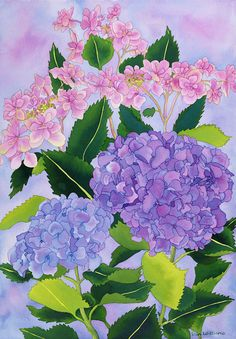 Hydrangea Wonder (30 x 20)   Original painting available for purchase on my website. Free shipping!