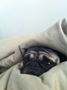 This is what Hawkeye looks like every morning while I'm trying to get him out of bed!