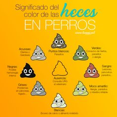 #dogs #perros #perrosfelices #doglovers #buggyhappypets #happypets #mascotas Happy Animals, Dog Lovers, Dogs, Happy Dogs, Allergies, Pets, Tips, Diet, Food