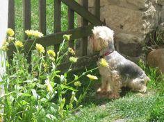 Z Pardubického kraje, kolem 50 let Dogs, Animals, Cat Breeds, Animales, Animaux, Doggies, Animais, Dog, Animal
