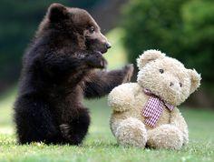 teddy bears =)