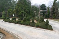 The documentary is a straightforward, often funny story of a laid-back, self-taught topiary artist who put Bishopville on the map and who strived to inspire others with his amazing gift. Topiary Garden, Garden S, Topiaries, Like Image, Bottle Art, Tree Art, Hedges, Amazing Nature, Cactus Plants