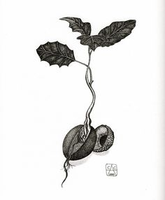 acorn sprouting tattoo - Google Search