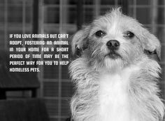 Please consider opening your heart and home and Fostering for a Rescue or Shelter