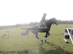 (8) horse gif | Tumblr