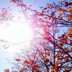 Fall_01