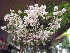 Cerejeiras na Júlio.Estão demais!