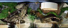 1: Aquarium - alle Bilder können zum Vergrößern angeklickt werden / all pics can be klicked to enlarge Dieses schöne Aquarium mit Sonder...