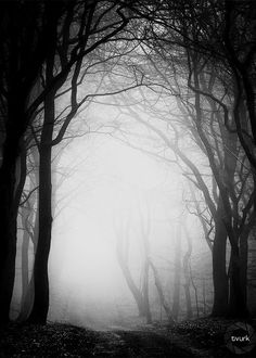 What nameless dread lies just beyond the mist? Ancient Chinese Architecture, Black And White Tree, Mystical Forest, Fantasy Castle, Halloween Backgrounds, Dark Photography, Dark Forest, Dark Places, Fantasy Landscape