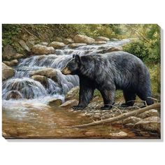 """Shadow Of the Forest (Black Bear)"" Wrapped Canvas Art - American Expedition Bear Paintings, Wildlife Paintings, Wildlife Art, Original Paintings, Original Art, Bear Art, Cool Landscapes, Pictures To Paint, Canvas Wall Art"
